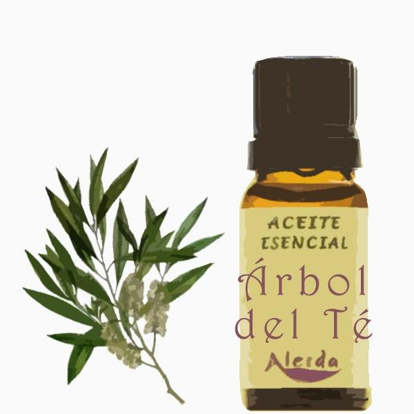 Aceite esencial de árbol del té